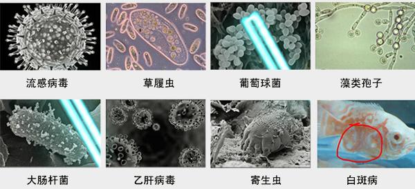 为什么要用紫外线杀菌器消毒