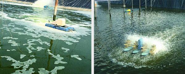 南美白对虾养殖过程中常遇到的水质问题1