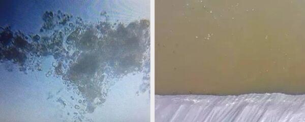 南美白对虾养殖过程中常遇到的水质问题3